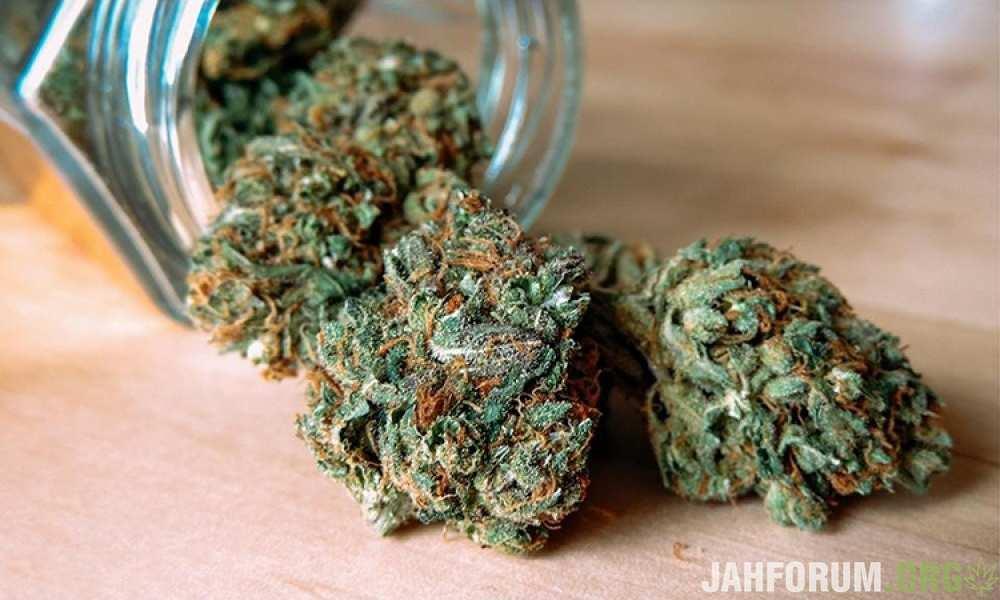Пустоцветы марихуаны осмотр наркотического средства марихуана