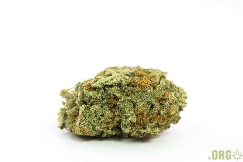 Irish-Cream-Marijuana-Strain.jpg