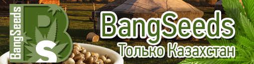 bangseeds