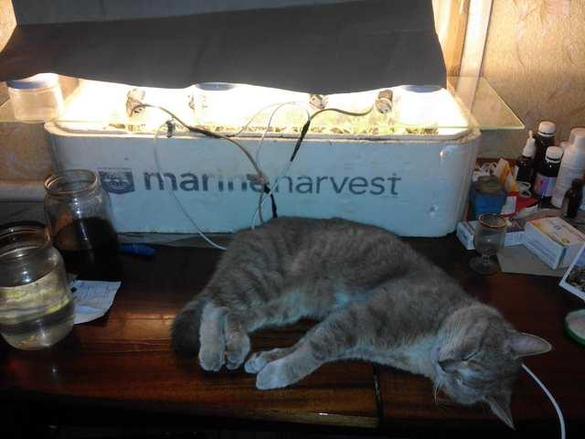 котяка и табака 😁