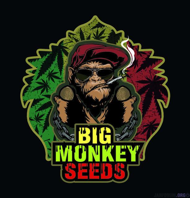 Big Monkey Seeds