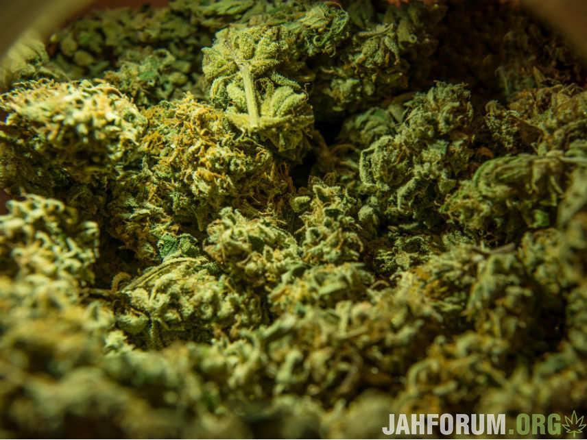 Житель Актобе хранил у себя на балконе почти 2 кг марихуаны