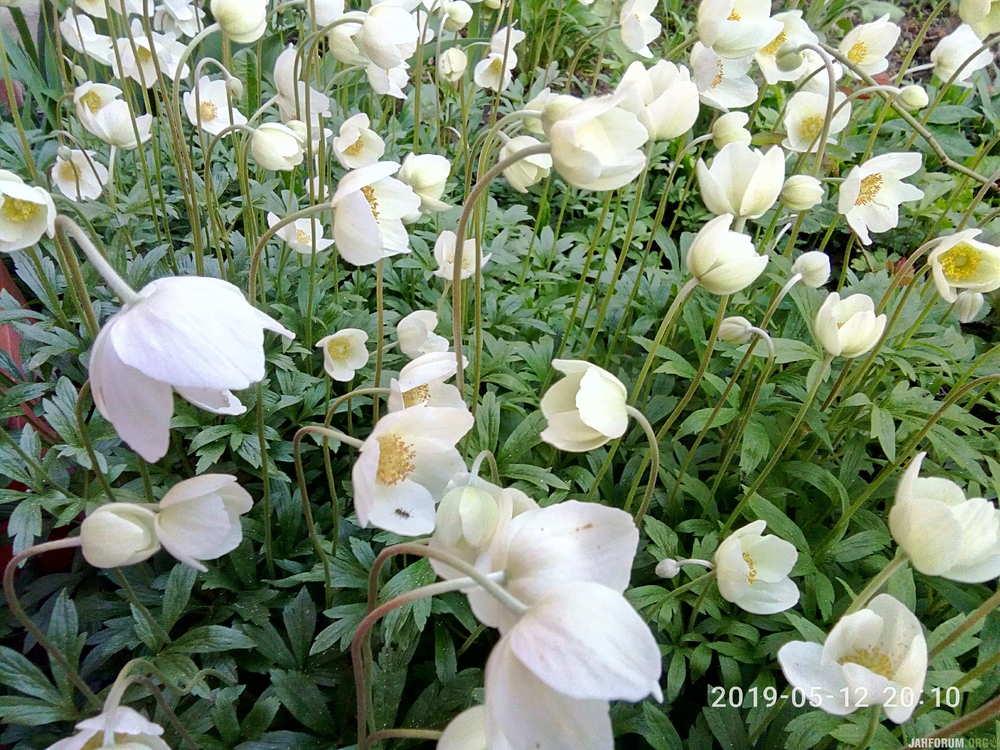 P90512-201043[1].jpg
