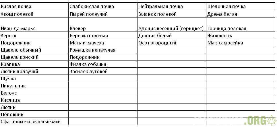 Sornyaki-kislotnost.jpg.757750f4f402cad433f4cef0003d348a.jpg