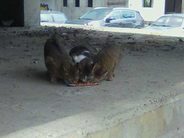 Мои бездомные дети. 😢
