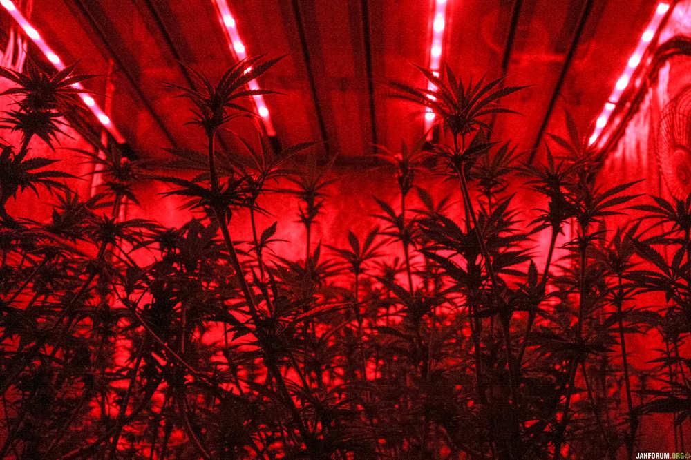 30.encino-red-alert.jpg