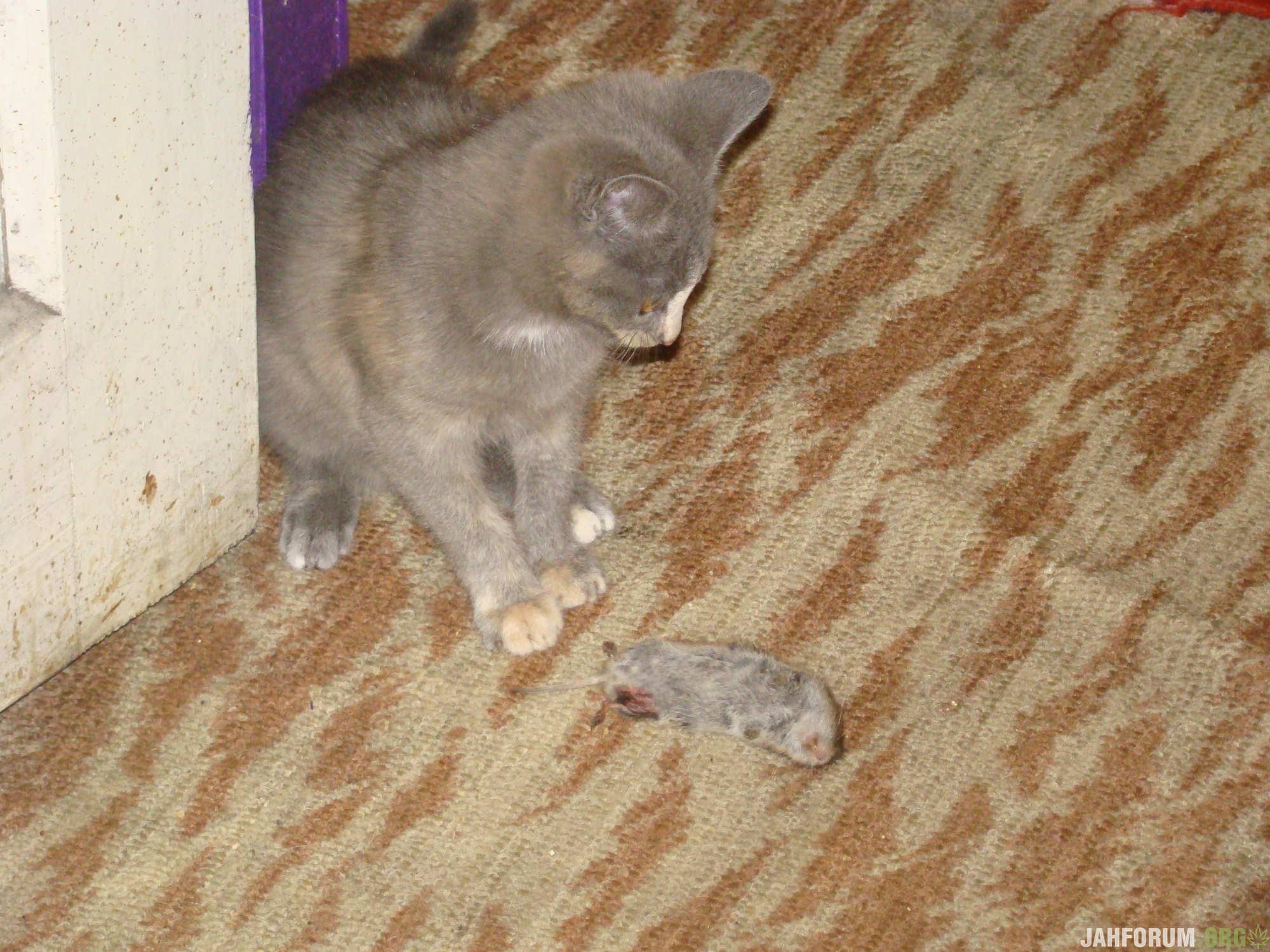 Маруся 3 месяца завалила крысу