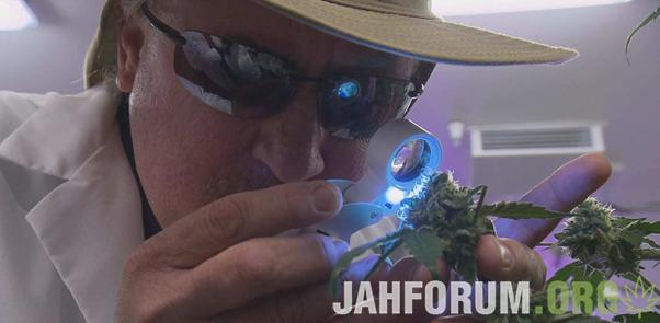 С Днём Гровера, JahForum!