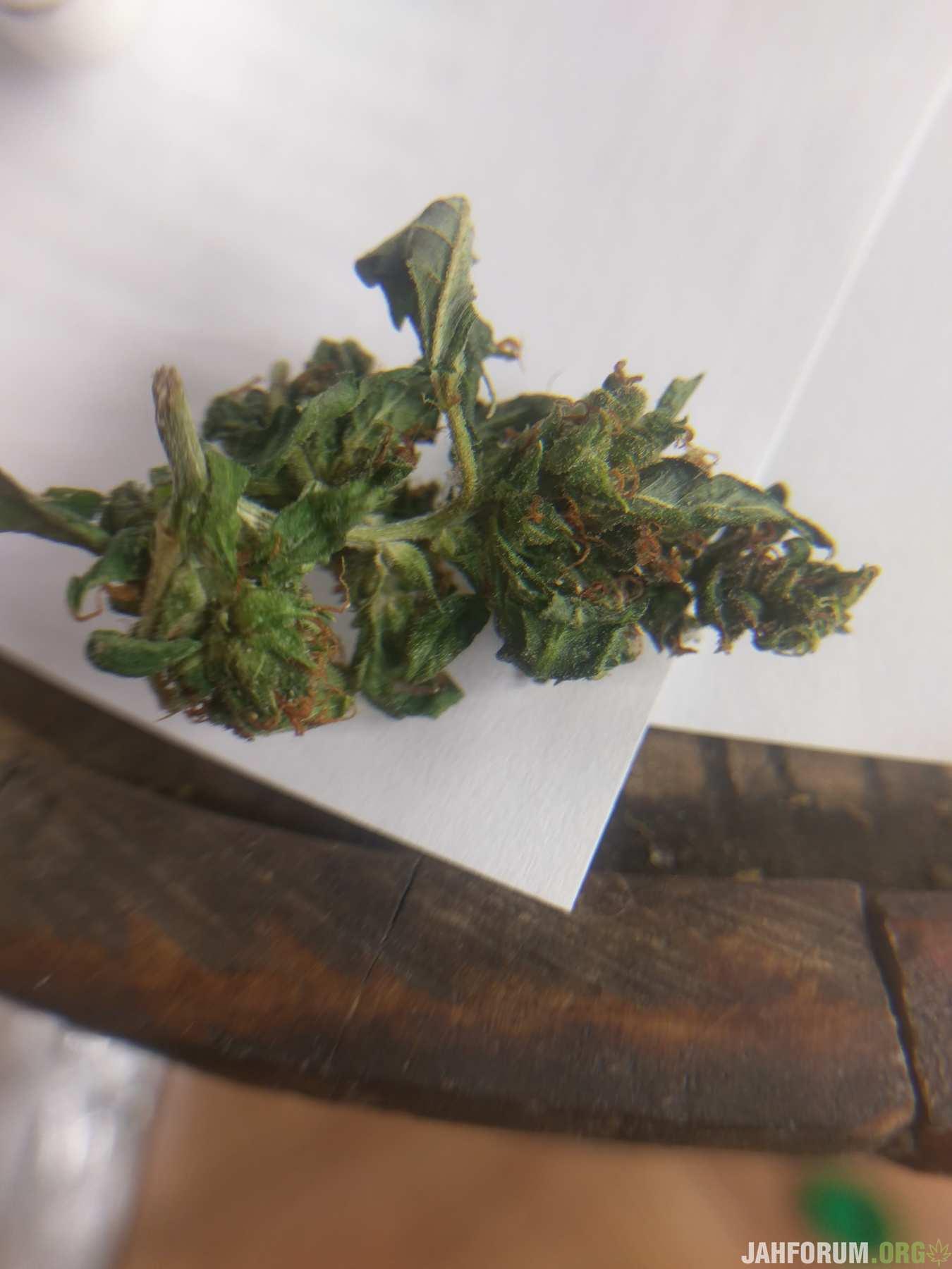 Понос после марихуаны как найти семена конопли