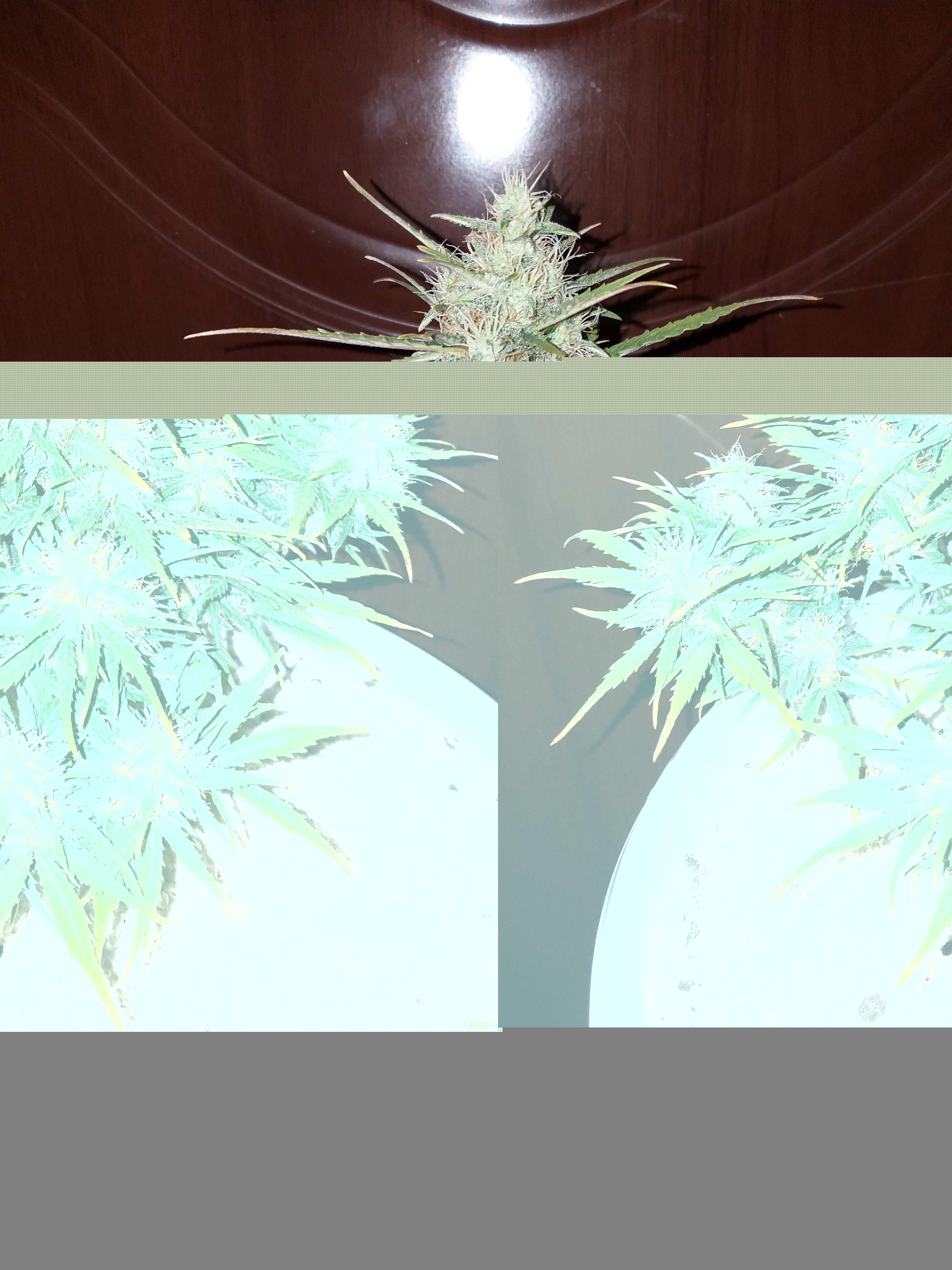 Заказал семена конопли форум купить экспресс тест на марихуану