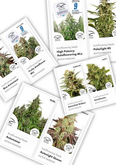 Dutch Passion Autoflowering Cannabis Seeds