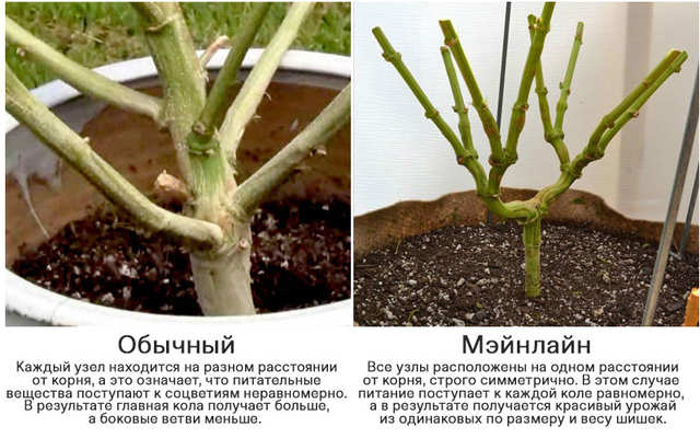mainlining_vs_traditional
