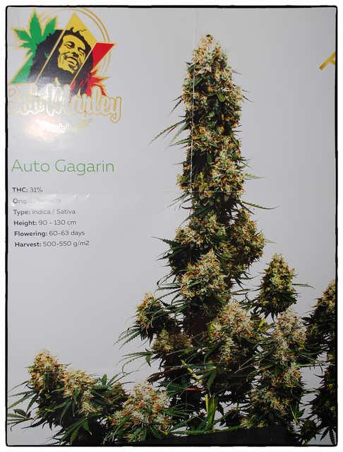 Auto Gagarin