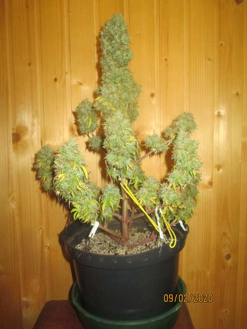 auto New York Diesel...Neuro Seeds...земля 4л
