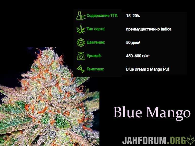 blue-mango.jpg.30931e6f3ce4ac03dbf01ffb8fcc4e02.jpg