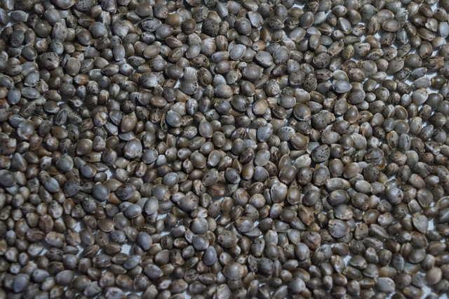 rw семена