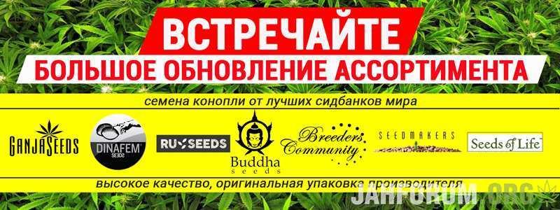 Семена конопли от: Buddha Seeds, Breeders Community, Dinafem, RuSeeds, Seedmakers и Seeds of Life уже в продаже!