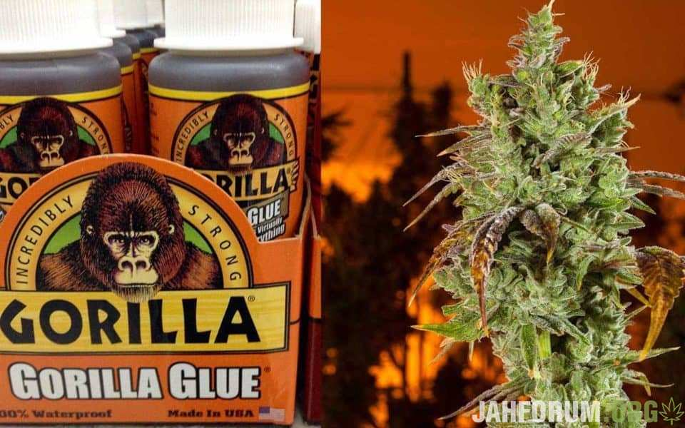 Gorilla-Glue-Settlement-960x600.jpg