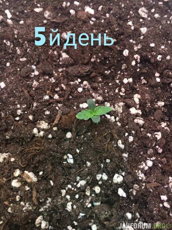 IMG_20201116_080237_011.jpg