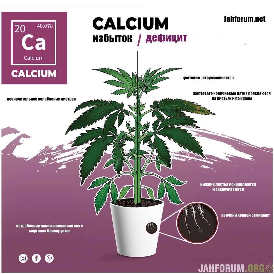large.Calcium1.jpg.91770c9282cba30d74859dfa9640aaf6.jpg