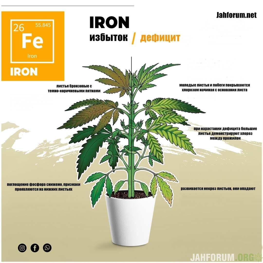 large.Iron1.jpg.179c0909c5090ffd27d8c77ffc60f708.jpg