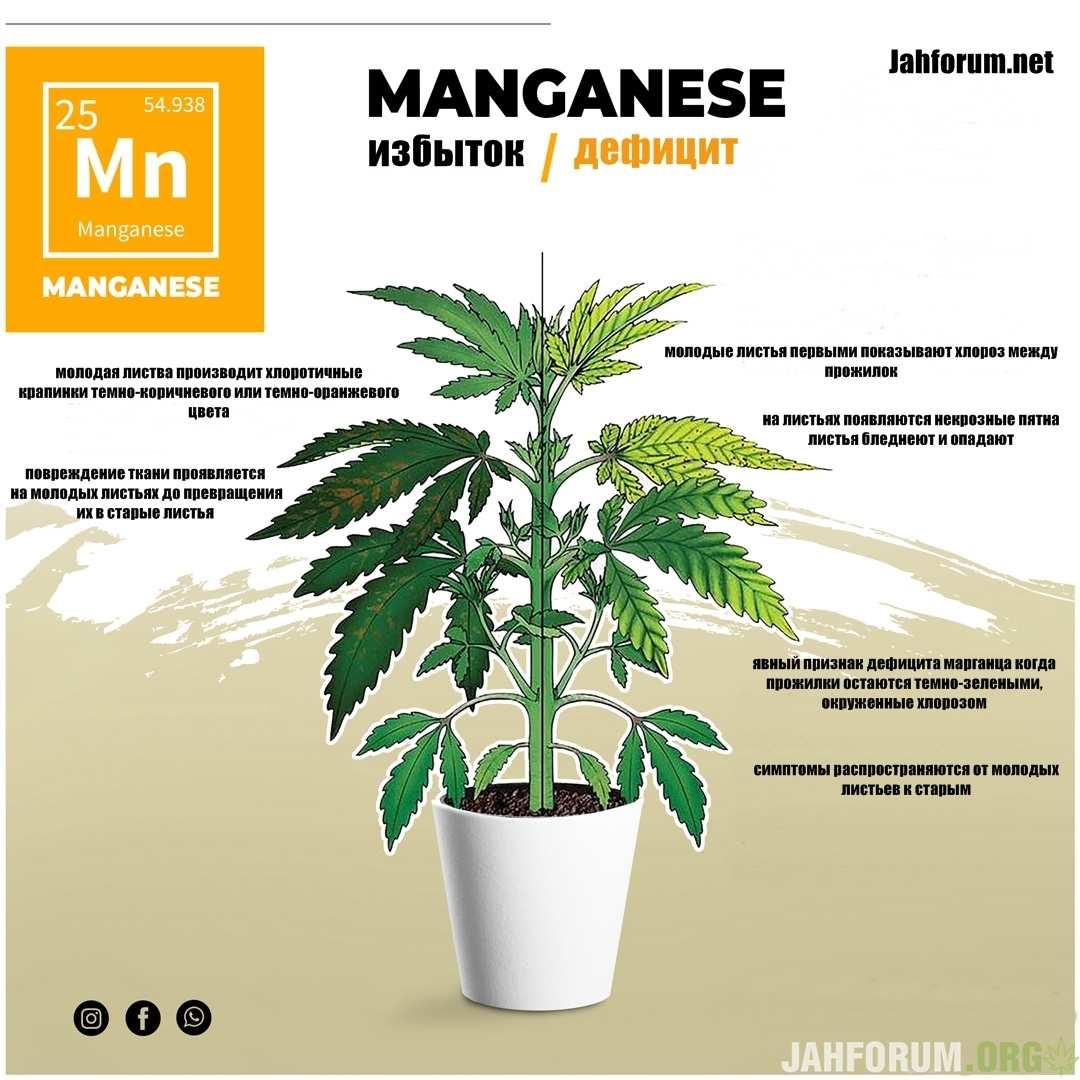 large.Manganese1.jpg.834df369b5d9a2bc7859a46294a41978.jpg