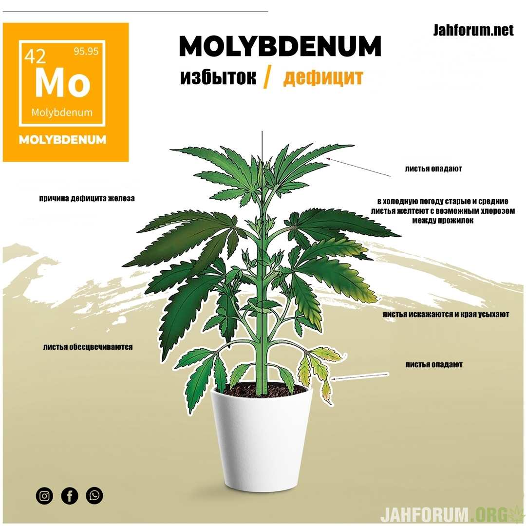 large.Molybdenum1.jpg.a8438632ebd25c7a97b949c2b6799db5.jpg