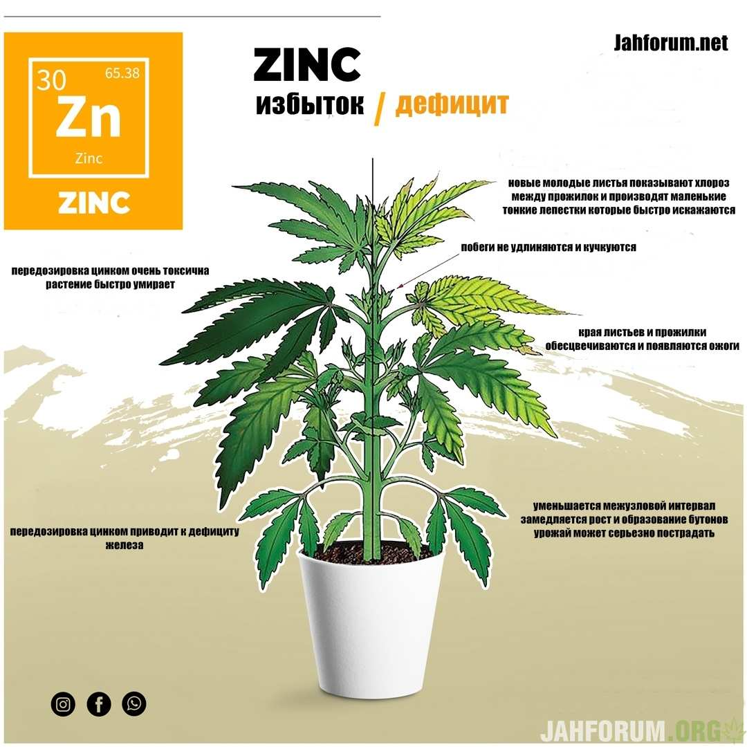 large.Zinc1.jpg.37456272f8d908445c6cc6557e1d770f.jpg