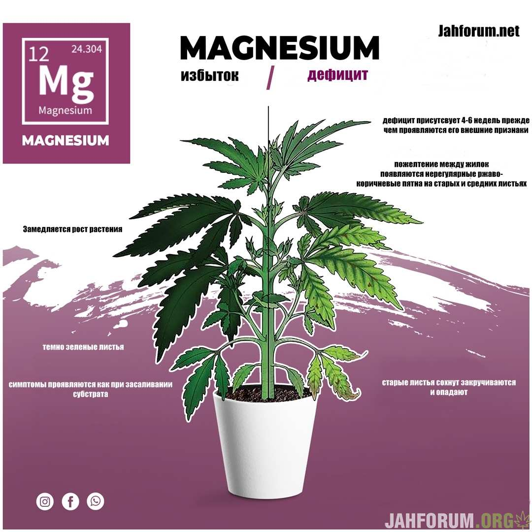 large.magnesium1.jpg.fe0639676ecfb7ddcbe9a4838ab4bdbe.jpg