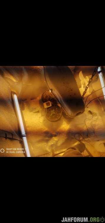 Screenshot_2020-12-18-21-59-31-966_com_miui.gallery.thumb.jpg.14fa74096a9b795b36a4666205fecb63.jpg