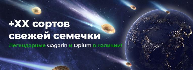 Obnovlenie_assortimenta_Rus_765x279.jpg