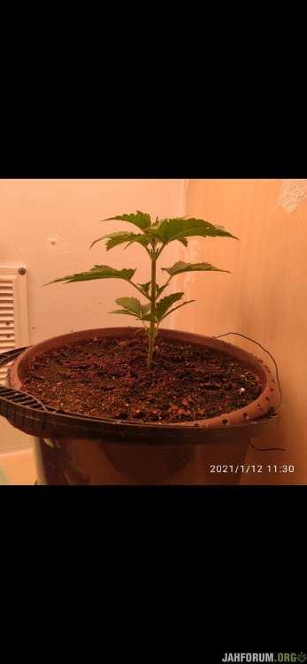 Screenshot_2021-01-12-12-31-31-385_com.miui.gallery.jpg