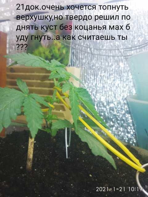 IMG_20210121_103553.jpg
