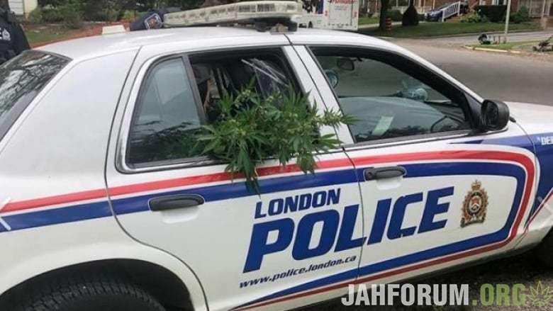 Канадская полиция вернула гроверу украденные у него кусты каннабиса