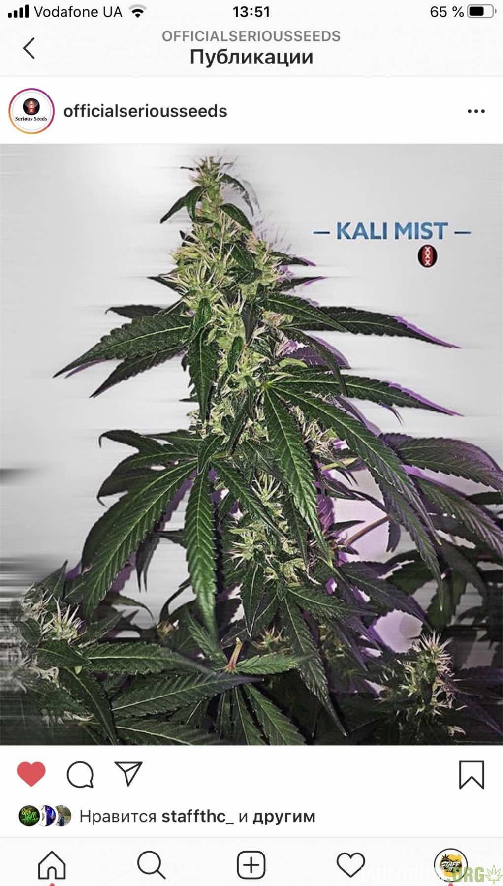 Моя ихняя Kali Mist