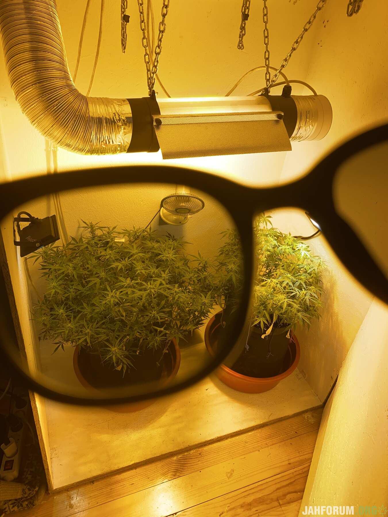 Смотри на мир только через такие очки