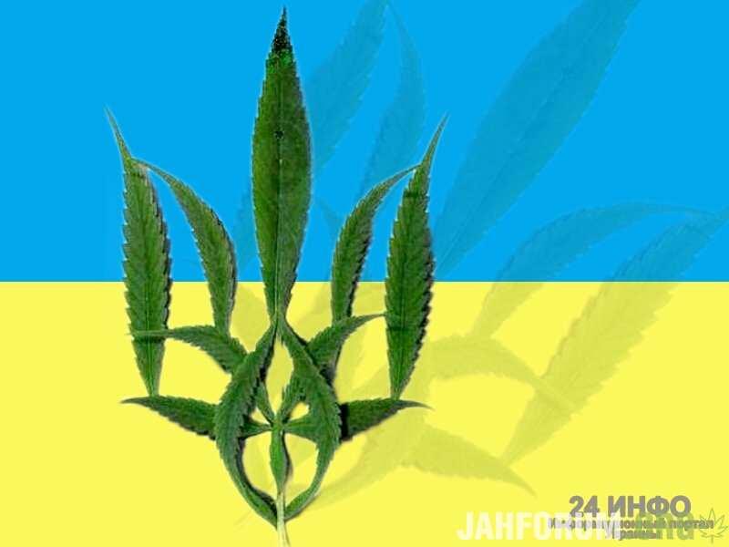 1444811518_marihuannaua2.jpg