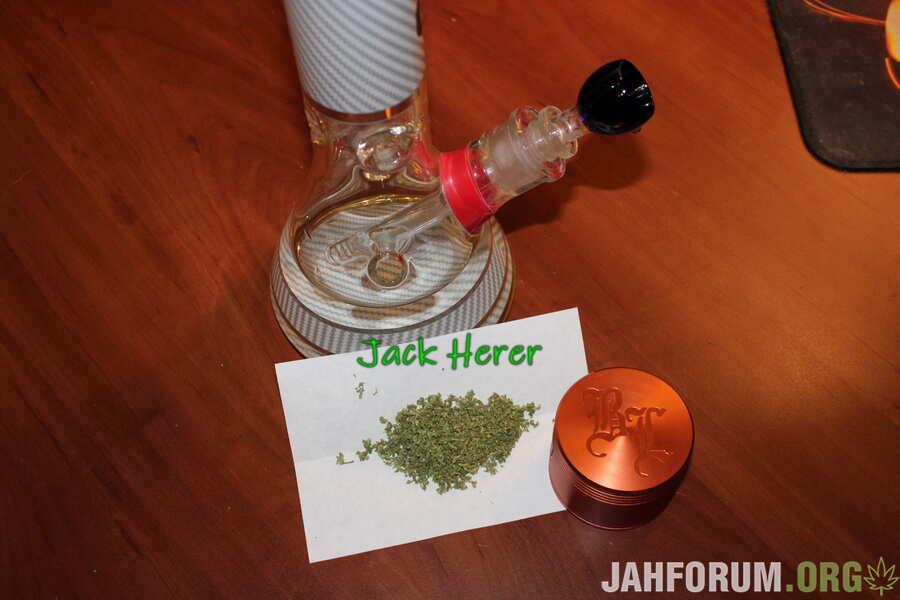JackHerer2021.JPG