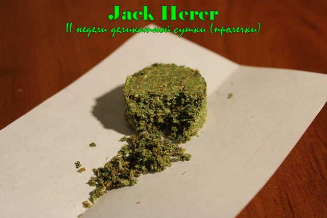 JackHererII.JPG