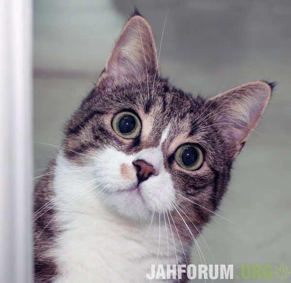 depositphotos_38965331-stock-photo-surprised-cat.jpg.14115cb79c8e910652a99e03423bb504.jpg